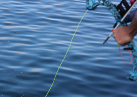 Bow Fishing Line